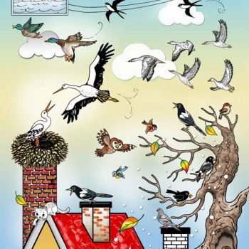 05-web-500-sťah-vtáčiky