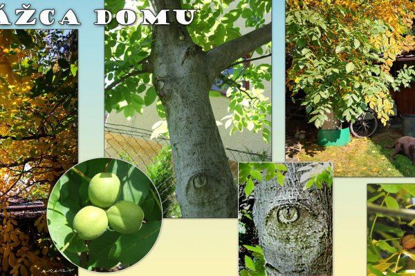 orech-strom