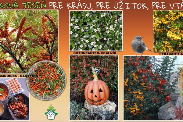 w-big-jesen-bobuľky