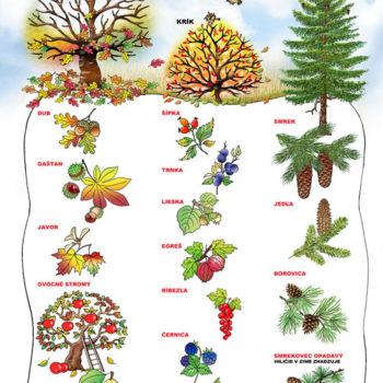14-web-500-strom,-krík