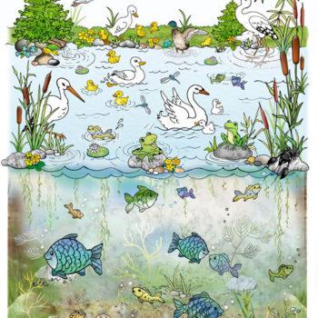 15-web-500-rybník-orig