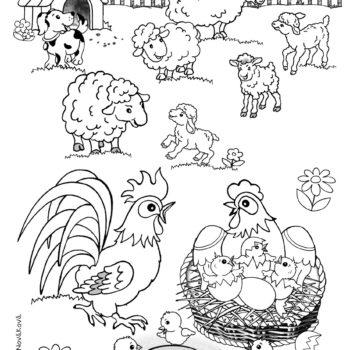 A4 2020 Ovečky a sliepka