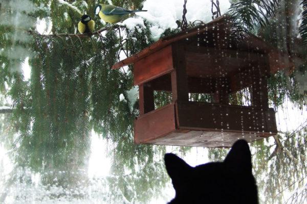 Mačka a vtáčky