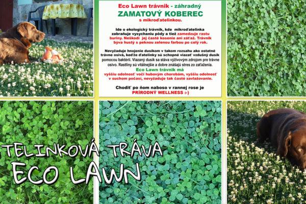 web-Eco-Lawn